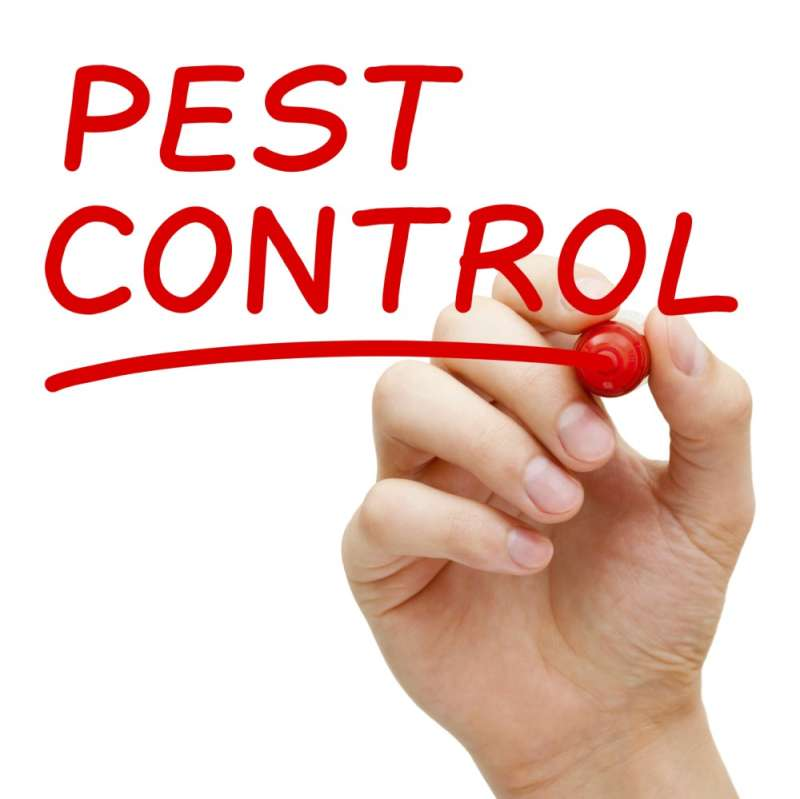 cats eye pest control in Bon Air
