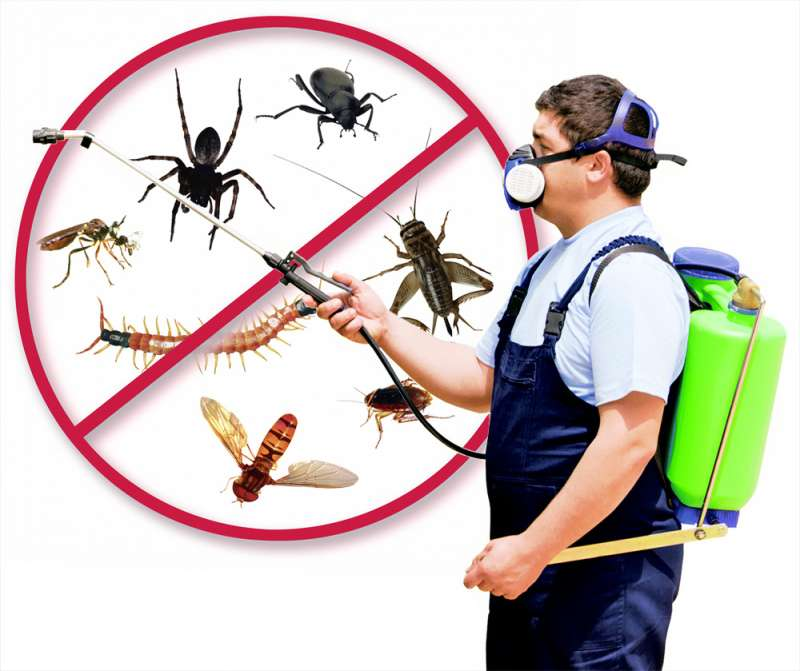 local pest control services in Brantleyville