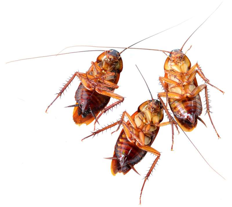 best pest control company in Gulf Shores