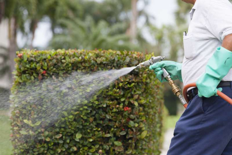 pest control contractors in Weston