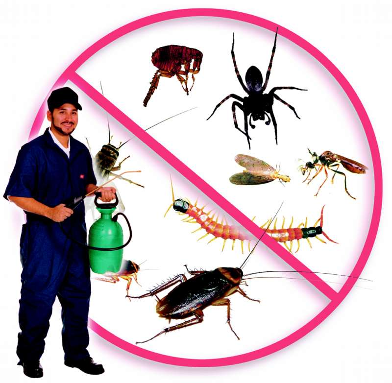 insect pest control in Jasper